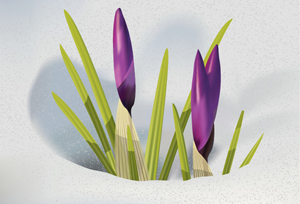 How to Illustrate Crocus Flowers in Adobe Illustrator