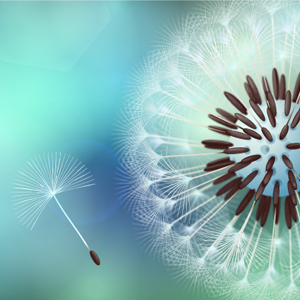 How to Create Vector Dandelion with VectorScribe in Adobe Illustrator
